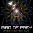 Bird Of Prey - Kiva