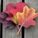 NightS - autumn (cut)
