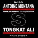 Antoine Montana, DJ Bo - Tongkat Ali (Rockstarzz Remix)