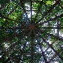 Alex Funke - Into the green Wood
