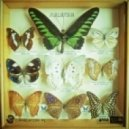 Space Dimension Controller - Butterflies Of Malaysia (Original Mix)
