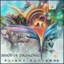 Birds of Paradise - Lucid Dream